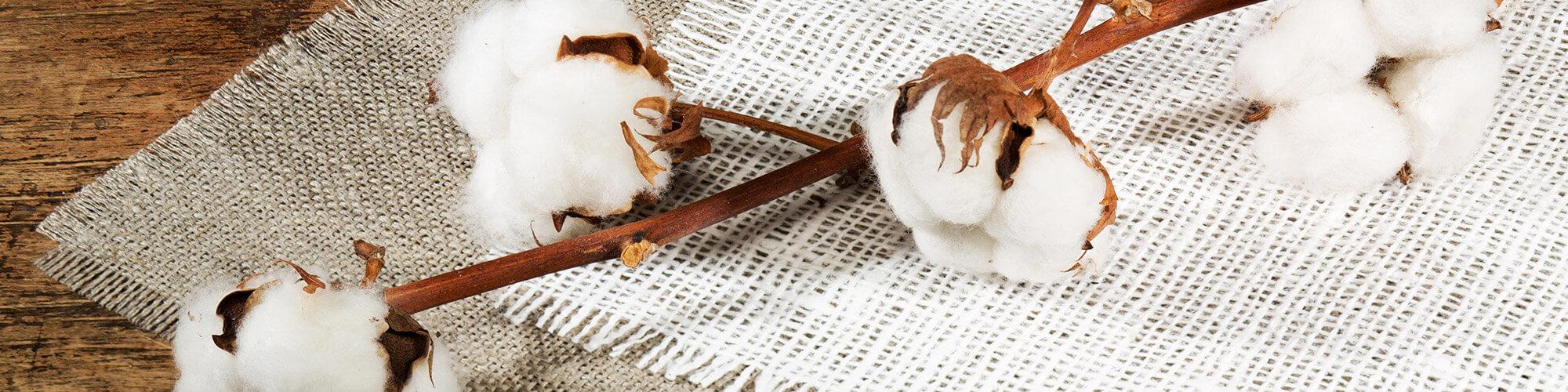 Lavorazioni cotone